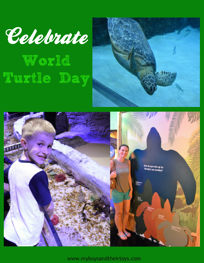 celebrate world turtle day